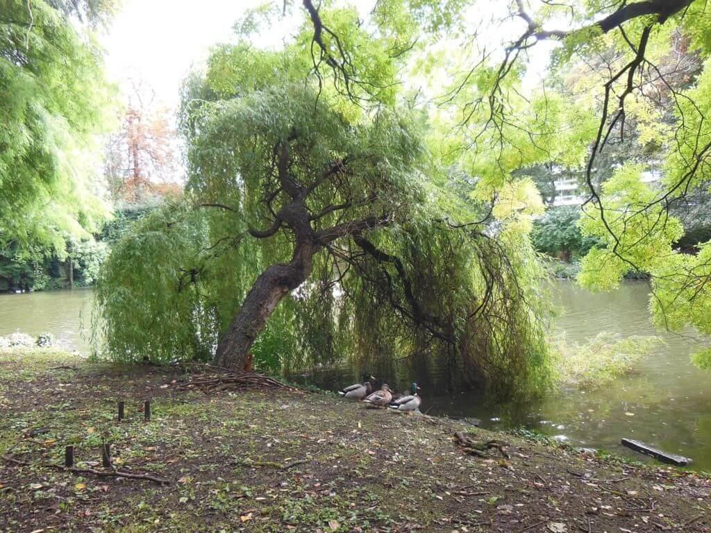 Parque del Jardín de la Reina (Parc du Jardin de la Reine)