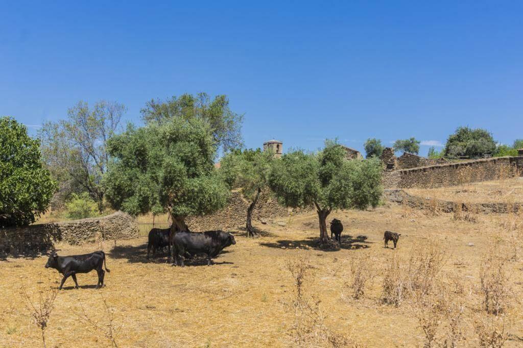 Vistas desde las murallas de Granadilla.