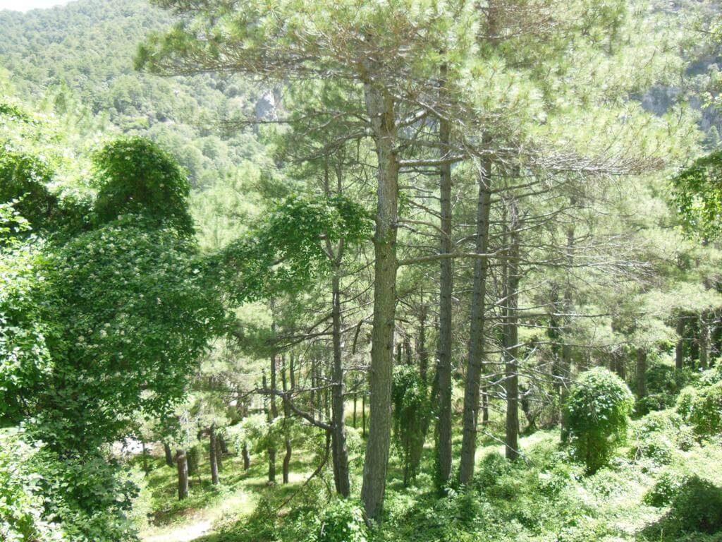 Parque Natural de los Calares Río Mundo y de la Sima